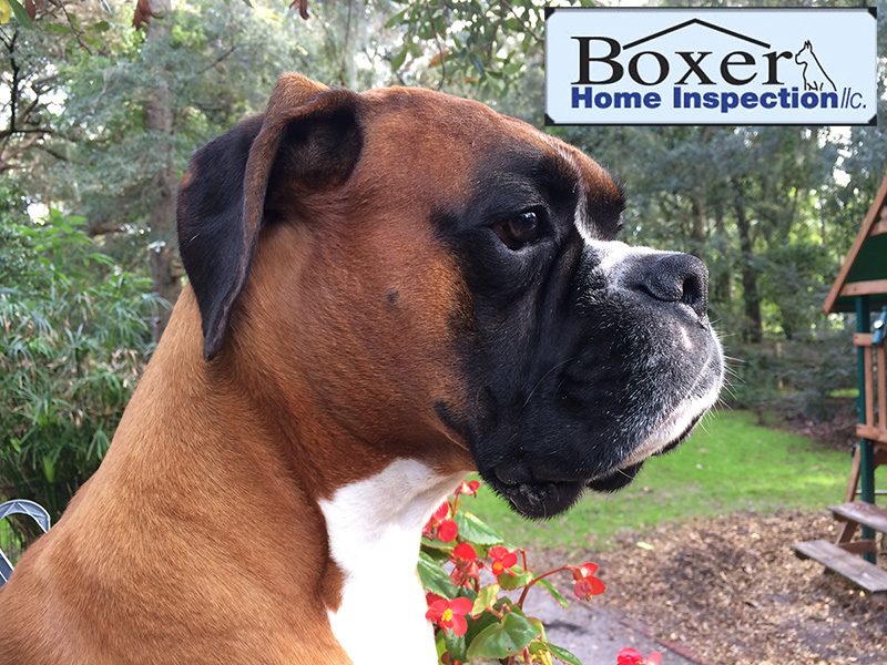 Boxer Home Inspection